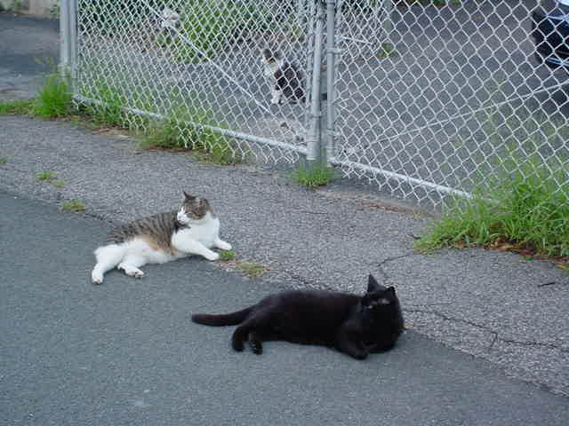 Antoinette Nikprelaj Hot: Friendly Tired Cat Visitors Celebrities