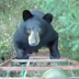 See why this hunter is afraid with this bear
