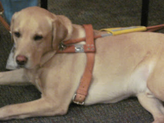 Jesse the Guide Dog