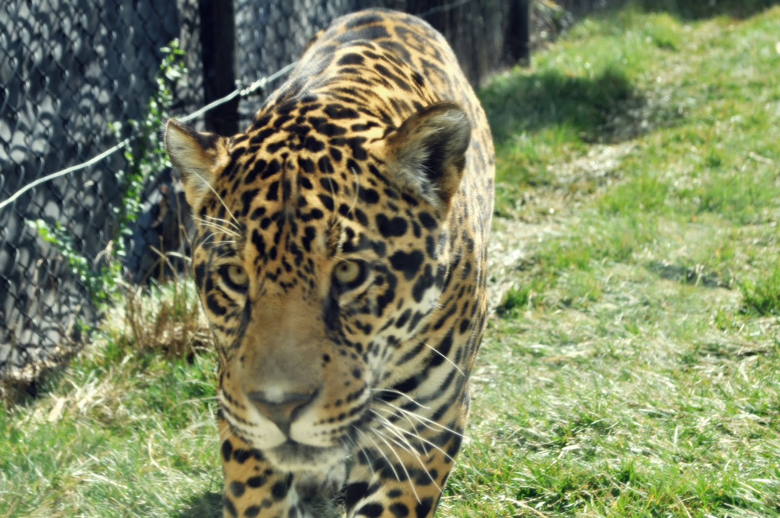 San Diego Zoo Coupon Code Mega Deals And Coupons