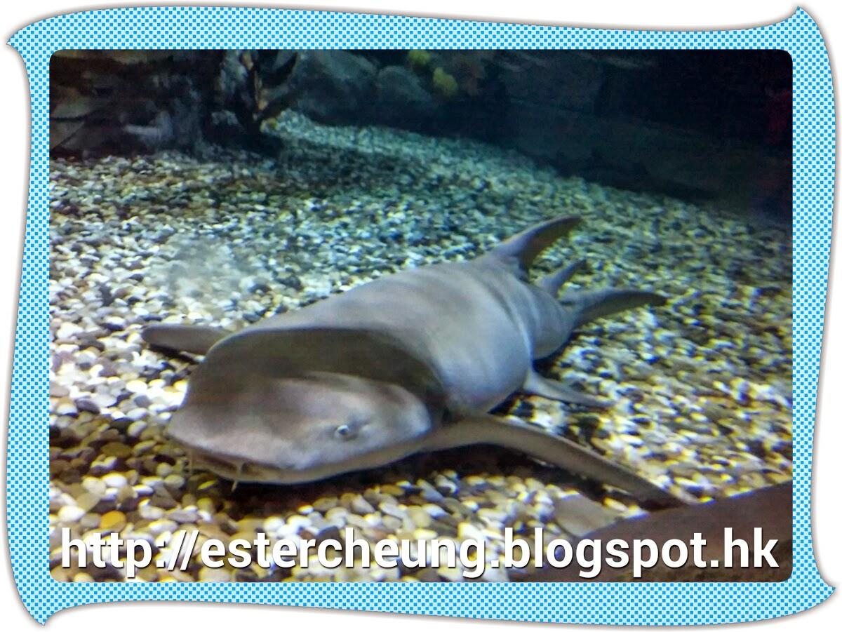 海洋公園 ♡ 尋鯊探秘 ♡ 優先預覽