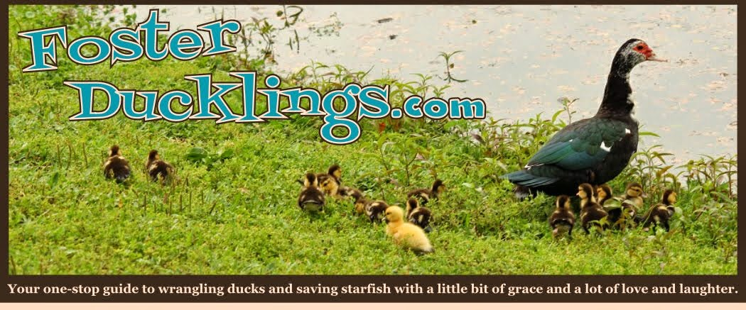 Foster Ducklings