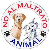 STOP AL MALTRATO ANIMAL