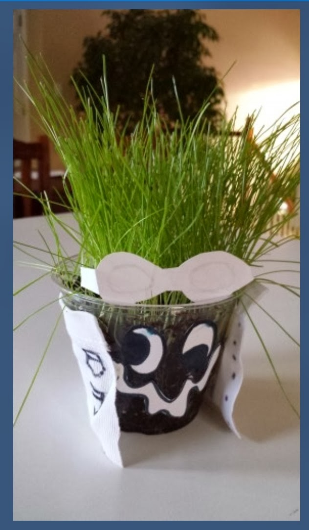 how to grow grass in a cup