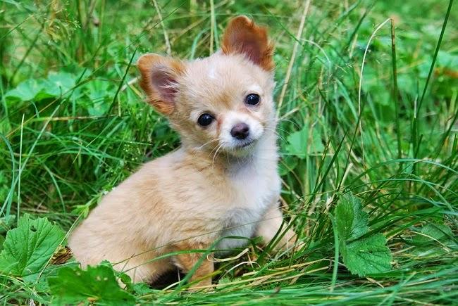 Stosowanie laseroterapii oraz ultradźwięków w leczeniu psa