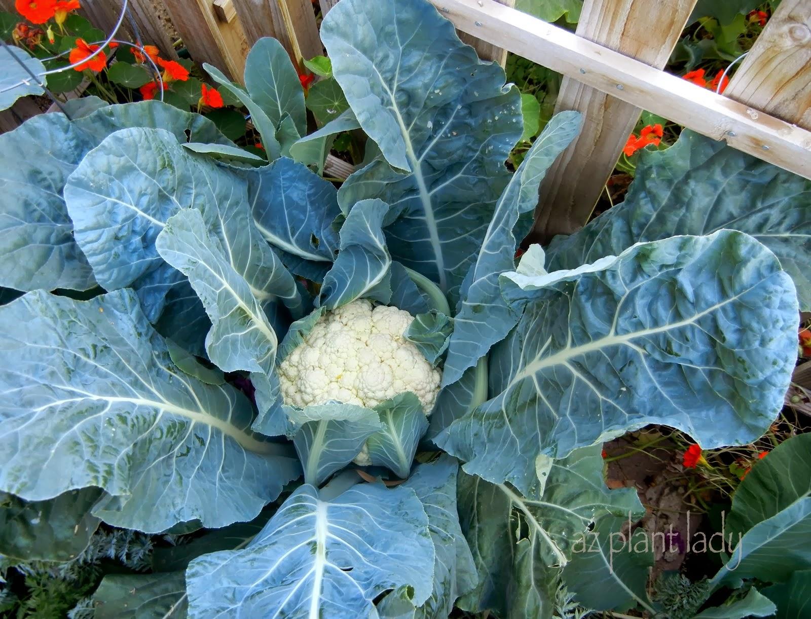 What Is Growing In My Vegetable Garden Ramblings from a – What to Plant in My Vegetable Garden