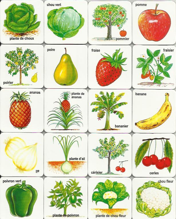 photo about Printable Vegetables called Relatives Crafts and Recipes: Cost-free Printable Summer months Video game