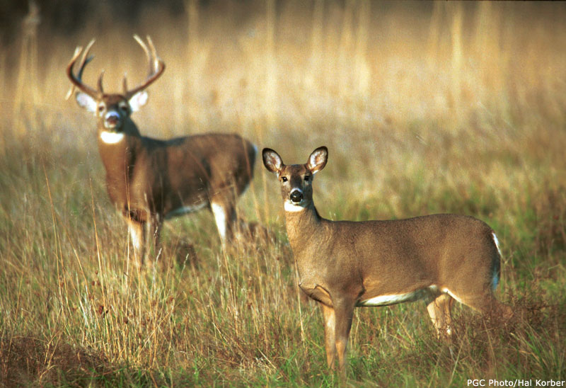 an argument in favor of white tail deer hunting The whitetail advantage: understanding deer behavior for hunting success [dr   for this product, would you like to suggest updates through seller support   gang and i will surely argue over from now till november, especially the buck to.