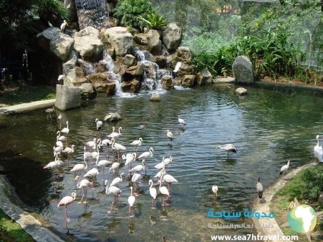 حديقة الطيور فى ماليزيا