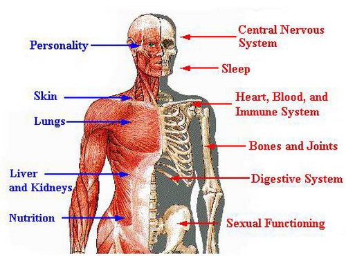 effect-of-alcohol-on-the-blood-to-body