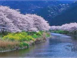 musim semi korea