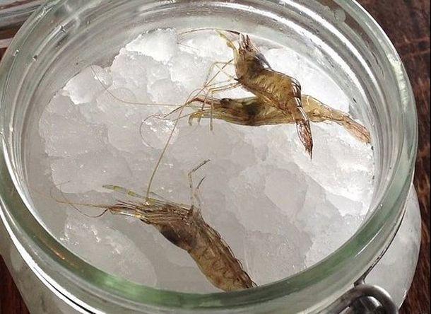 thumb licheni creveti pe gheata si morcovi deshidratati vezi cum arata farfuriile la cel mai bun restaunat din 4 Noma, Copenhaga... Cel mai tare restaurant din lume si n 2012   poze