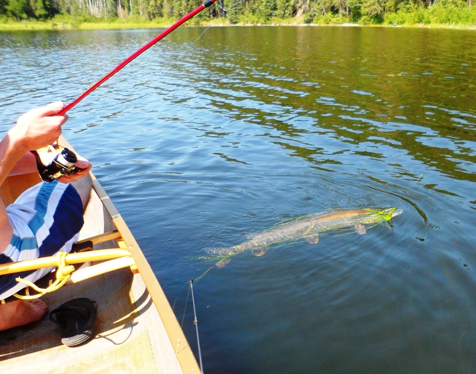 Bow narrows camp blog on red lake ontario family has a for Red lake ontario fishing