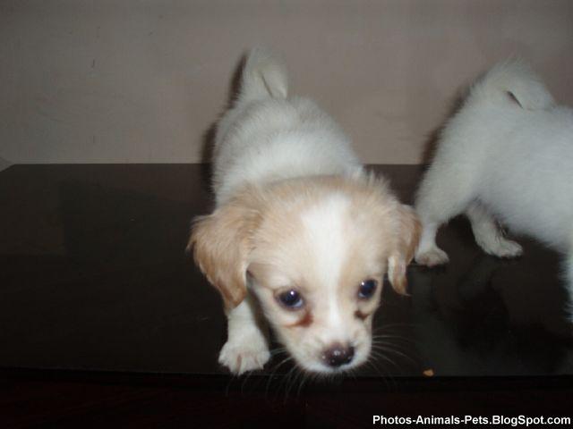 http://4.bp.blogspot.com/-5y4fzO6S6QY/TY3Z-5Kp0GI/AAAAAAAAAPc/VErey74LTZU/s1600/Photos%2B-puppy%2Bdogs_0004.jpg