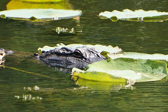 Fishing exploring texas state parks for Sheldon lake fishing