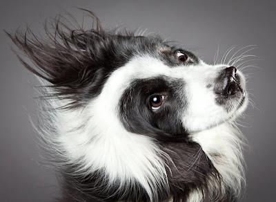Прикольные собаки на фотографиях Carli Davidson