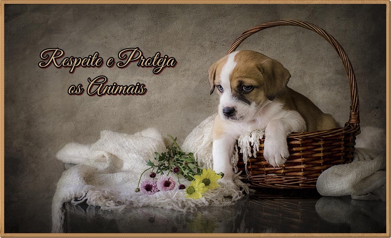 ღ Respeite e Proteja os Animais ღ