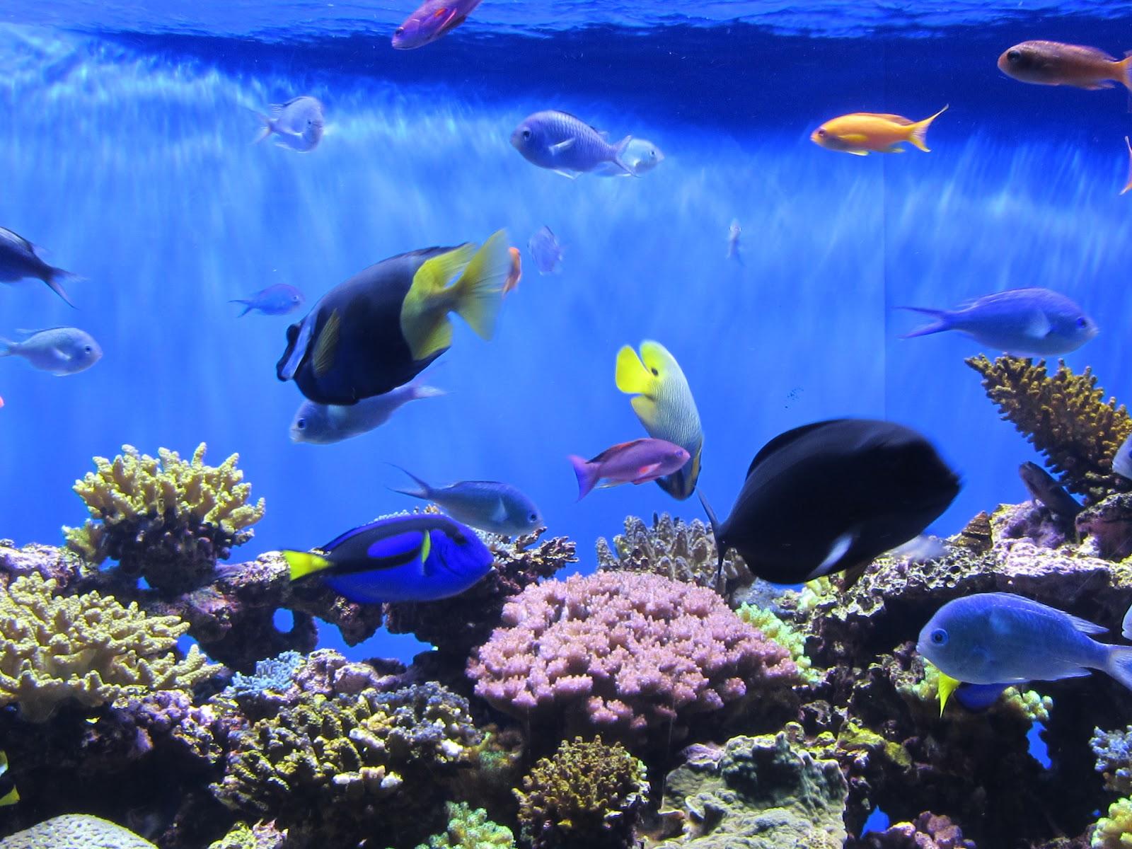 Enjoy San Diego Birch Aquarium At Scripps