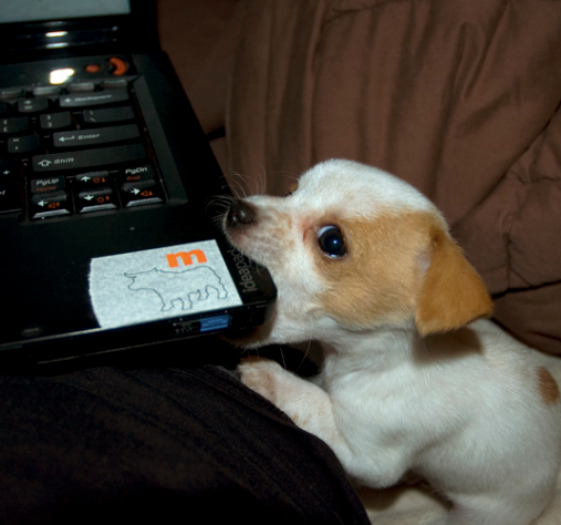 funny picture dog bites laptop