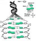 DNA MALAY