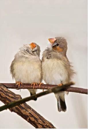 clone stamp tool, retouching foto, memperbaiki foto, belajar photoshop, untuk pemula, gambar burung