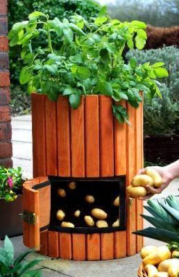 Piccoli Frutti: Vasi per la coltivazione di patate in terrazzo