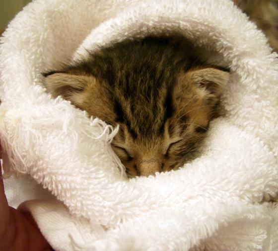 Cute little kitty.