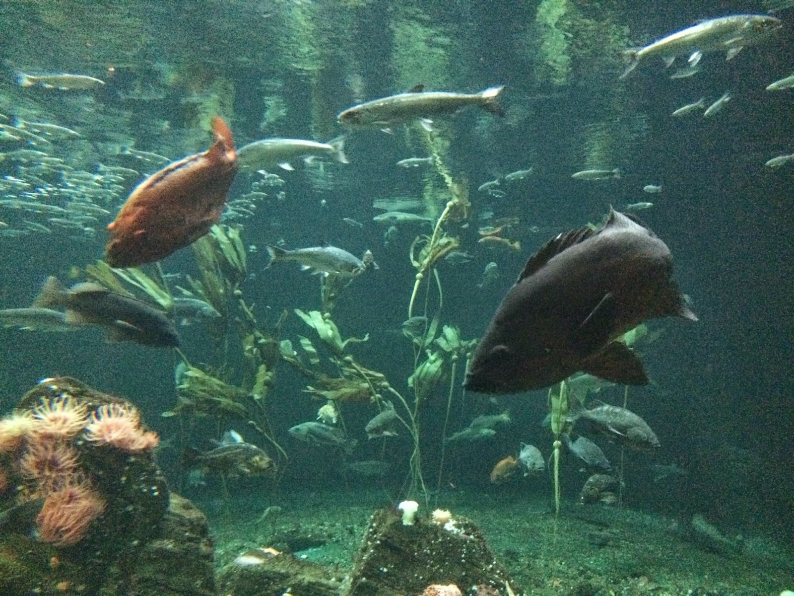 Freshwater aquarium fish vancouver - He S A Celebrity Because Of This Article Http Globalnews Ca News 1766096 One Eyed Vancouver Fish Gets Fake Eye So Other Fish Wont Bully Him