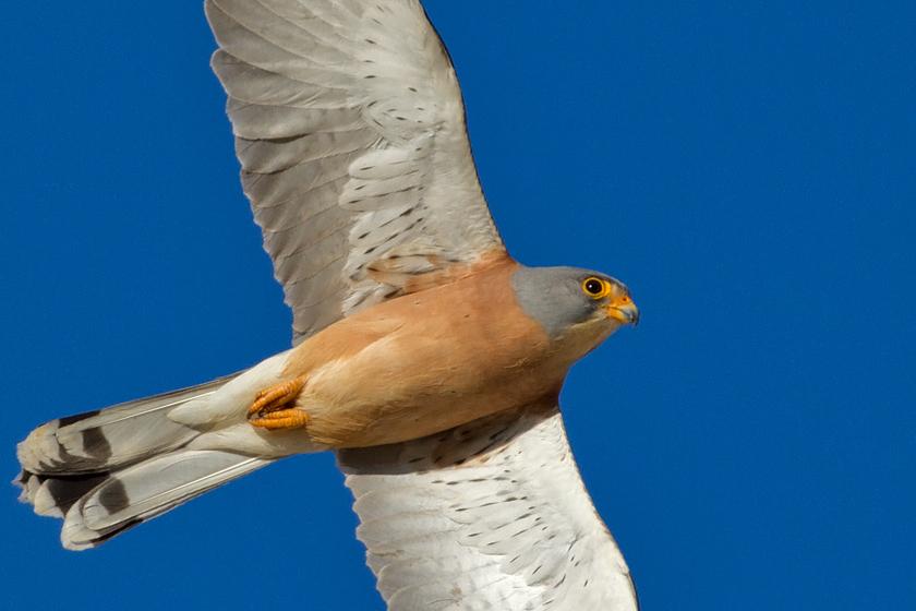 Condor Bird Tour Ireland