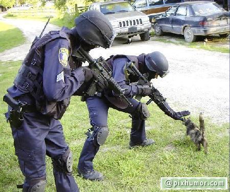 policiais-vs-gatinho