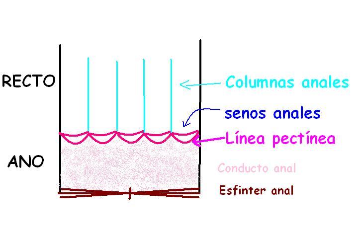 Anatomía UNAM: RECTO-CONDUCTO ANAL