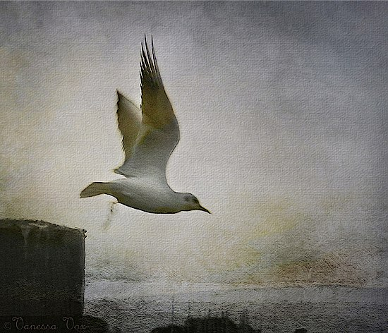Falling to Fly © Vanessa Vox