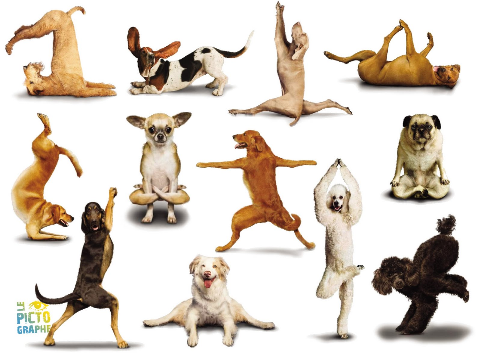 Cute Yoga Dogs -dog+yoga+dogs01.jpg""