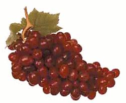 Manfaat Nutrisi Buah Anggur Merah