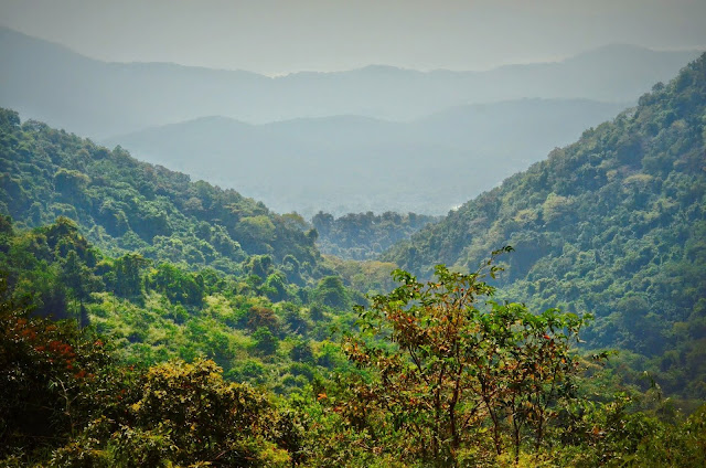 Rich forest of the western ghats