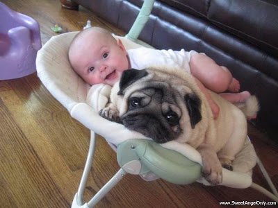 funny_picture_little_baby_with_big_dog