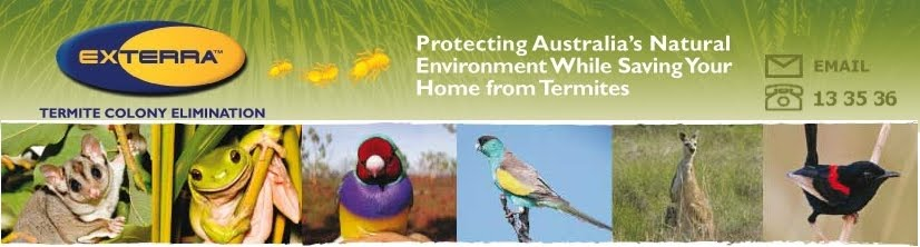 Termite, Termite Baiting,  Termite Bait Stations, Termite Treatment Melbourne and Brisbane