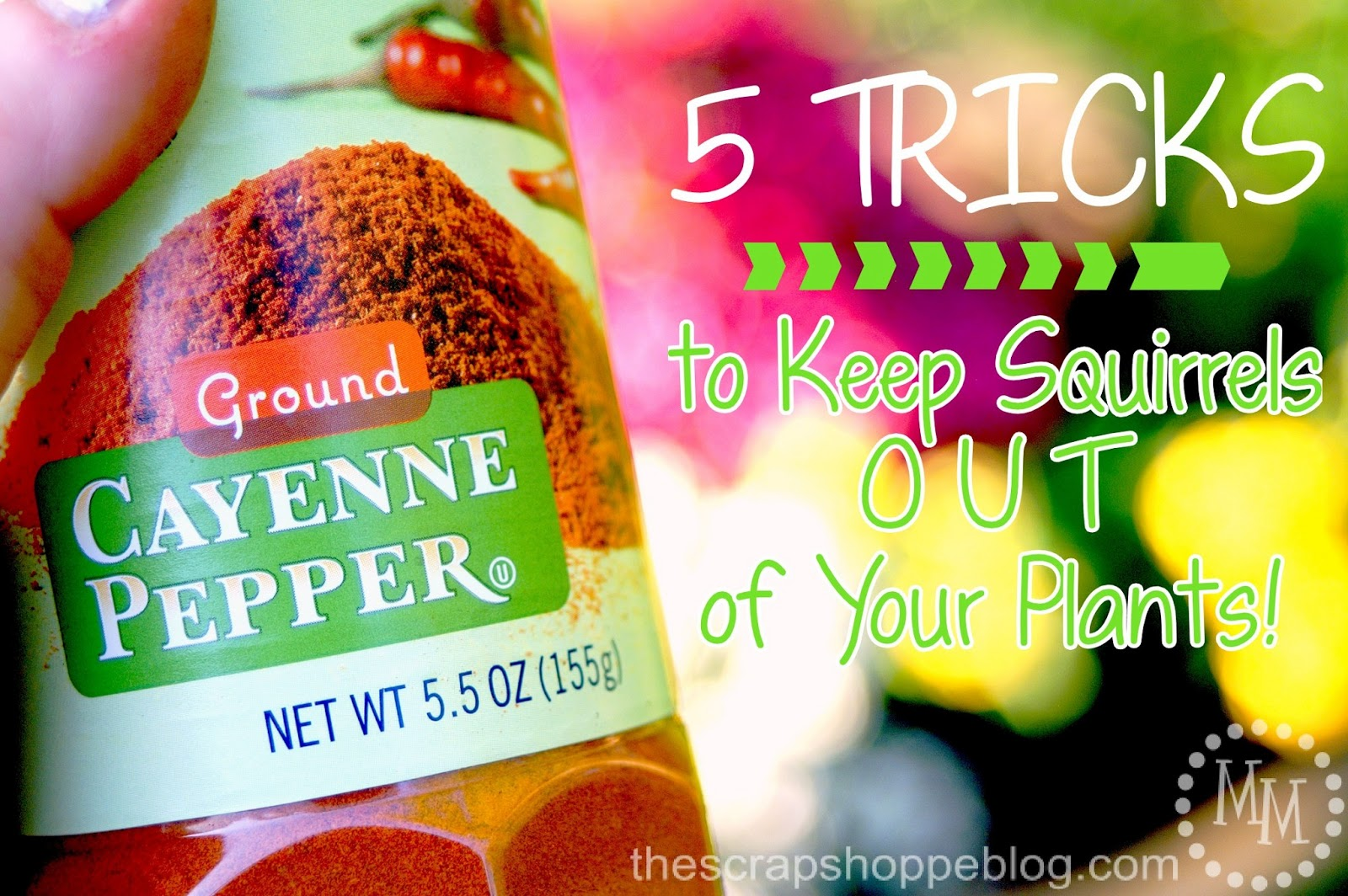 5 Tricks To Keep Squirrels Out Of Your Plants The Scrap Autos Post