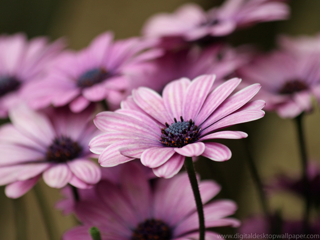 Purple Flower Wallapaper