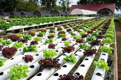 Teknik Pertanian Berkelanjutan