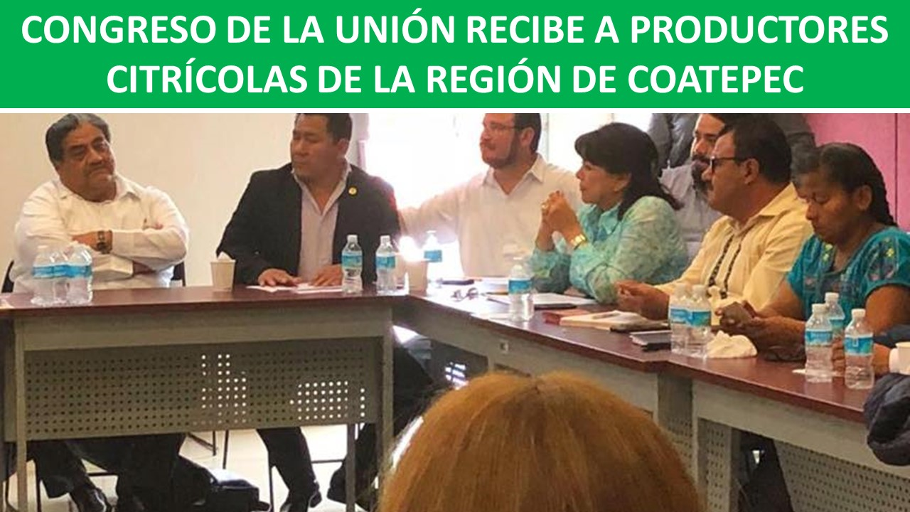 DE LA REGIÓN DE COATEPEC