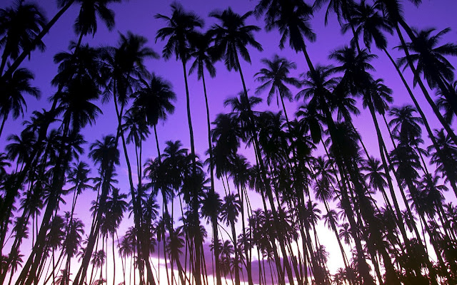 palm grove, hawaii wallpaper