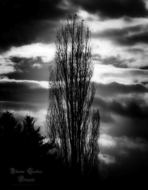 so seh die Welt in grau eine Schwarz Weiß Fotografie eines Baums