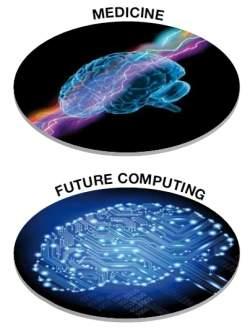 Projeto Cérebro Humano criará cérebro virtual em supercomputador