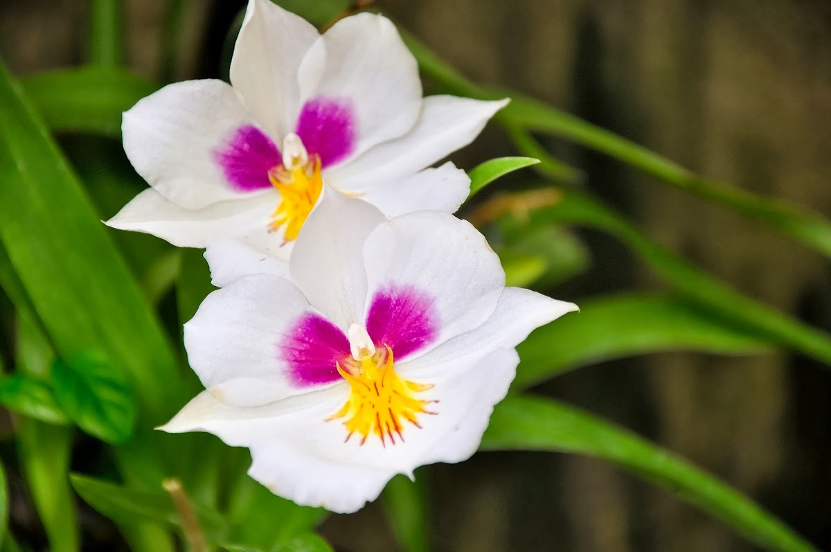 Blok888 Top 10 Most Beautiful Flowers in the world 1