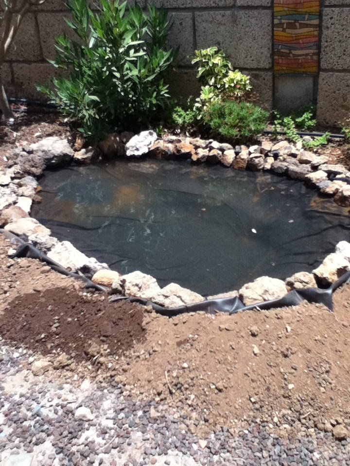 Tenerife life creating a pond has created a haven for wildlife - Build pond wildlife haven ...