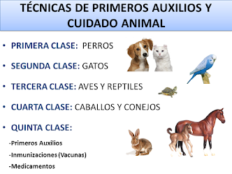 CURSO DE PRIMEROS AUXILIOS Y CUIDADO ANIMAL