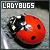 I like ladybugs
