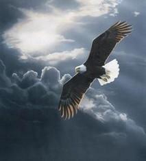Oiseau sans rivage