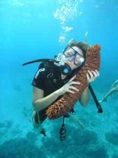 mon gros concombre de mer